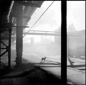 Andrew Garn, Dog, 2000