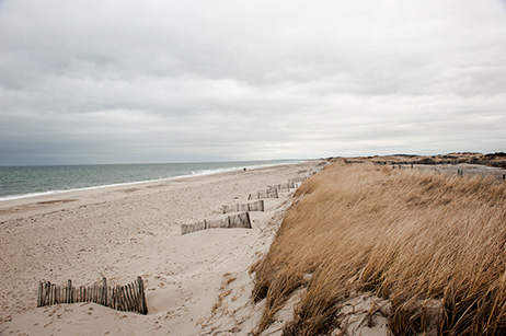 Sandy Neck Beach, 2013