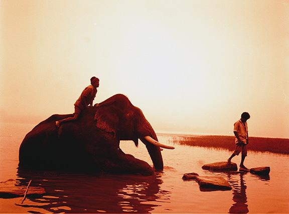 elephantindia