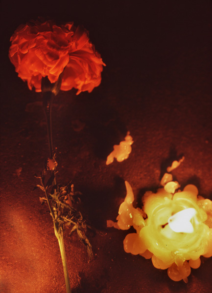 Rose112.jpg